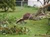 Hurricane Irene Newport