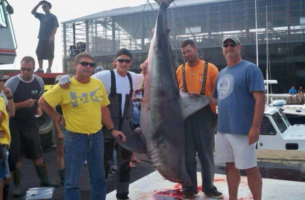 Newport Monster Shark Tournament - Friday and Saturday